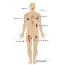 Imunski sistem in energija